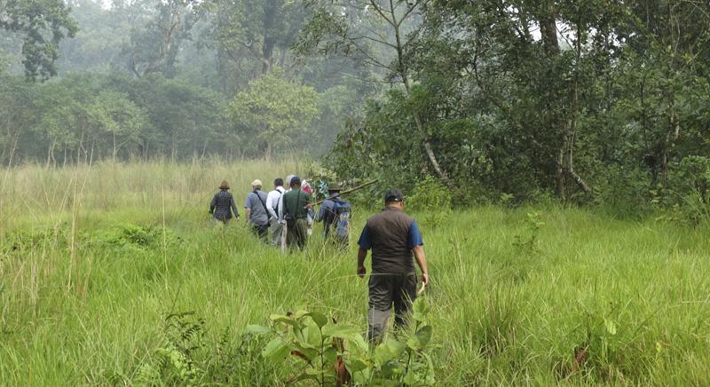 jungle_walk03.jpg