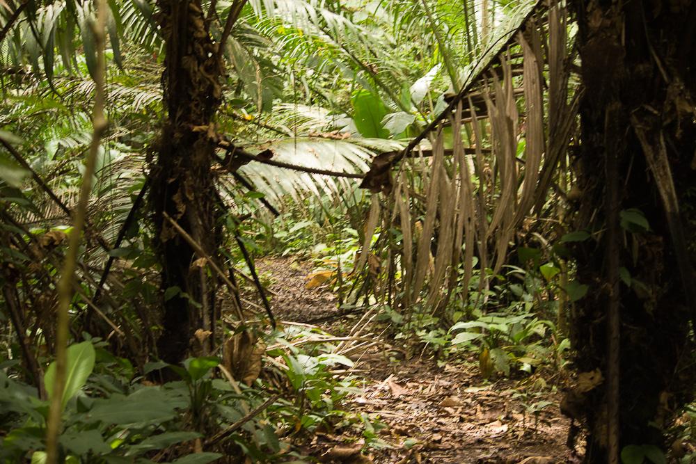bocas-del-toro-jungle-walk-91.jpg
