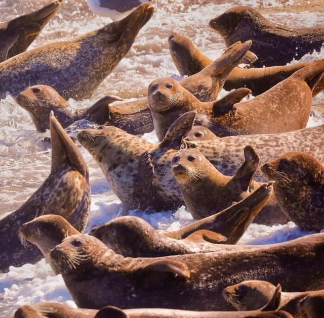 海豹2.jpg